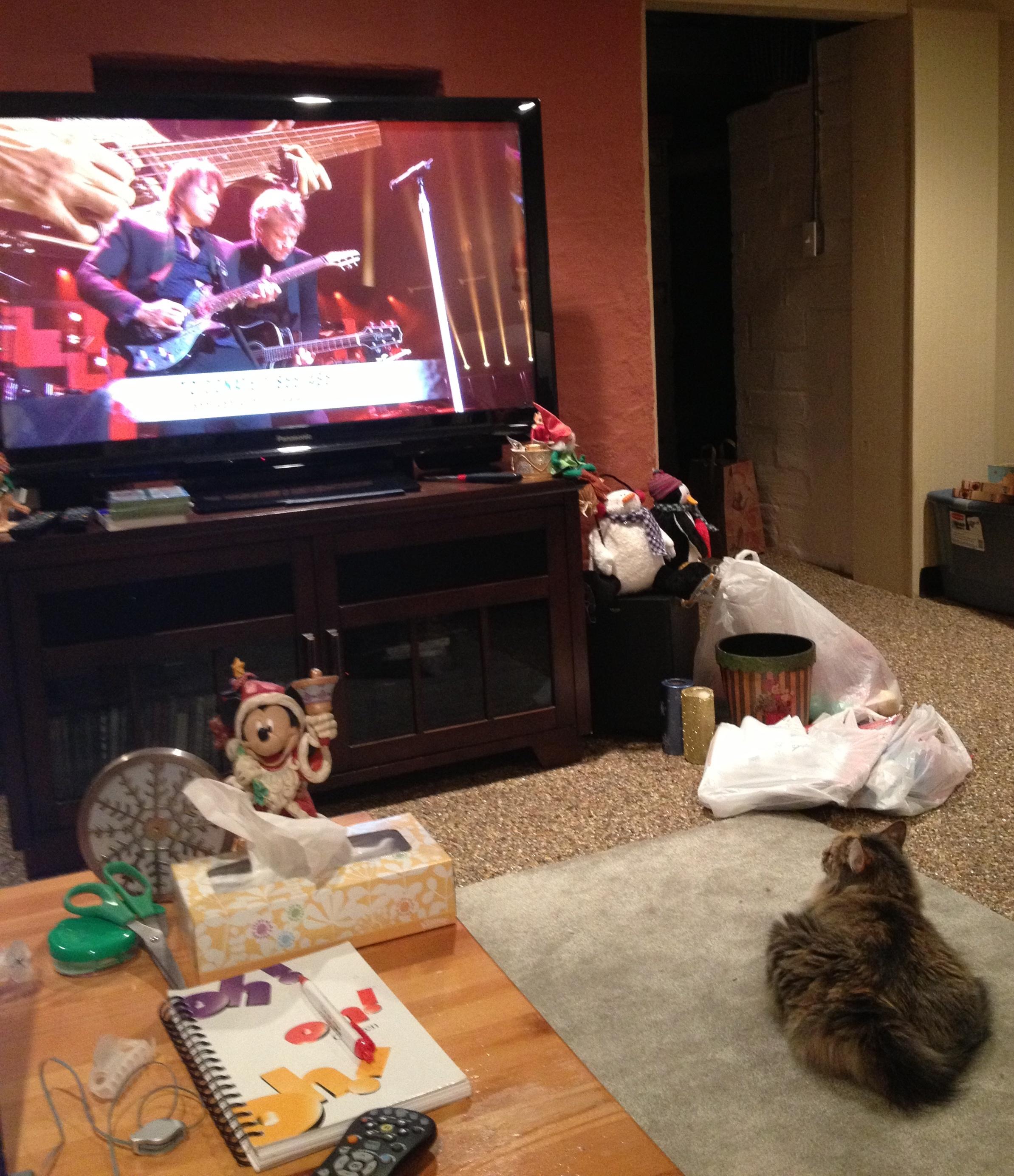 My cat watching Bon Jovi